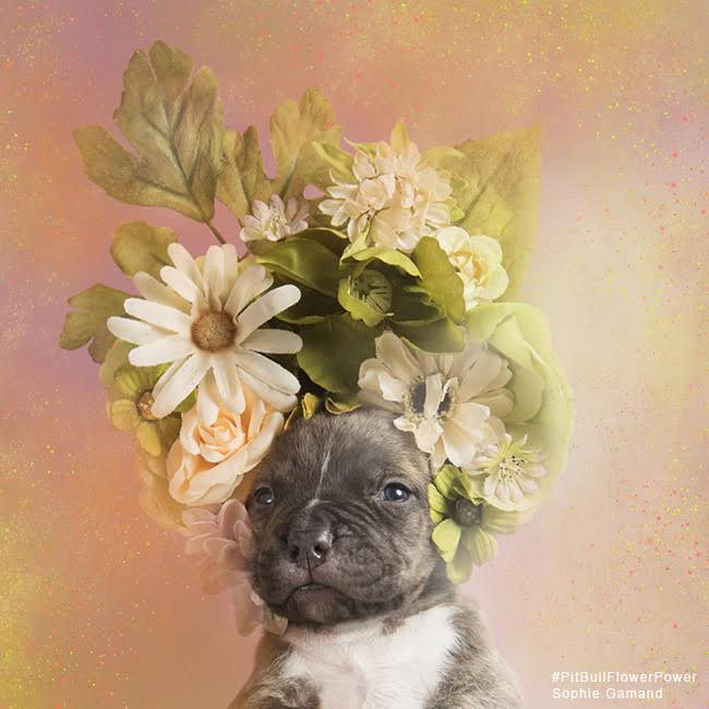 sophie-flower-pup-one