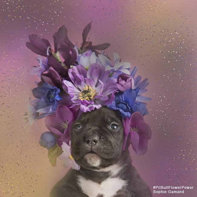 sophie-flower-pup-two