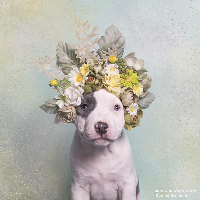 sophie-ahoy-flower