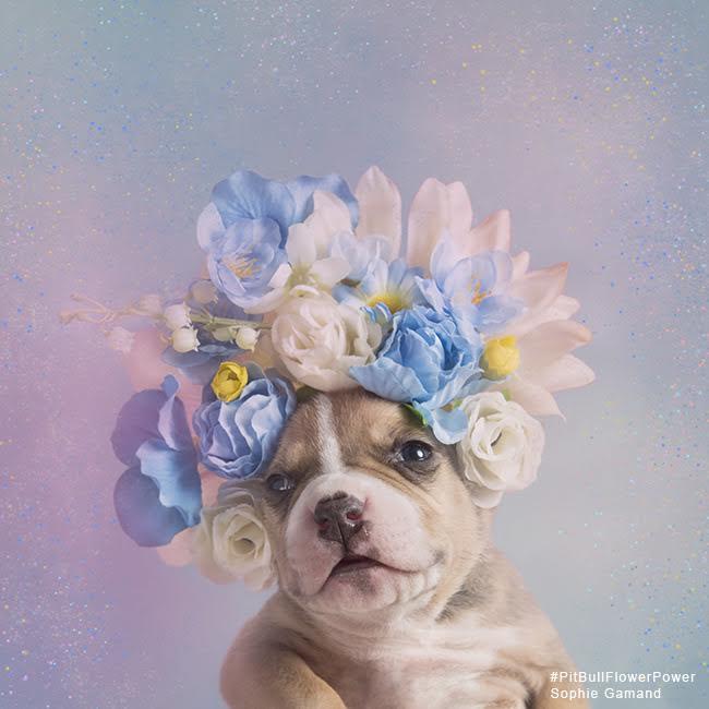 sophie-flower-pup-7