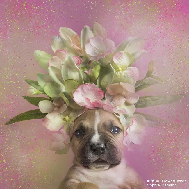 sophie-flower-pup-five