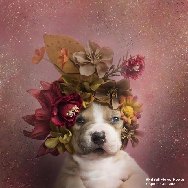 sophie-flower-pup-four