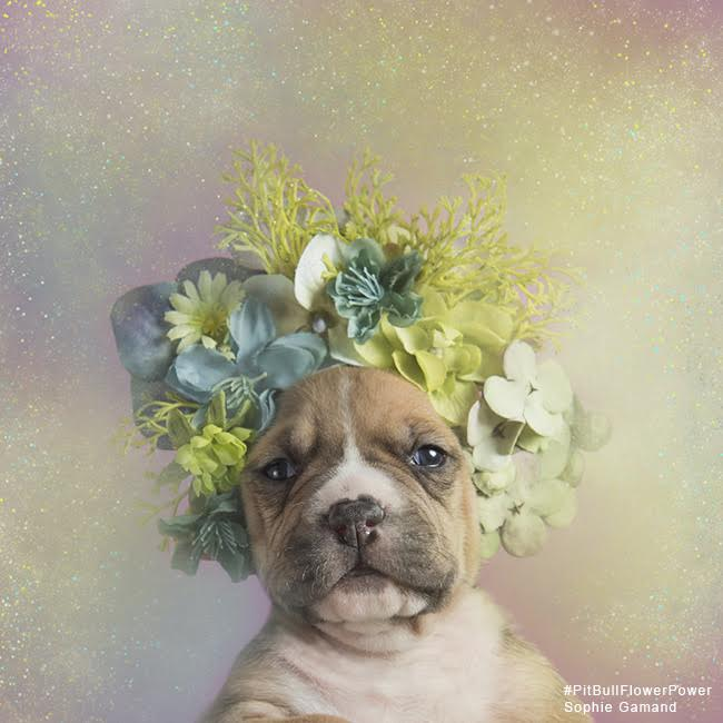 sophie-flower-pup-six