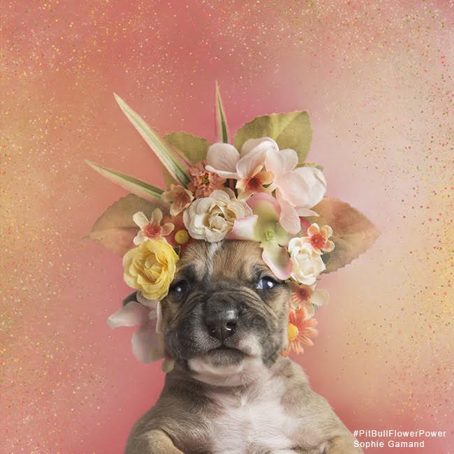 sophie-flower-pup-three