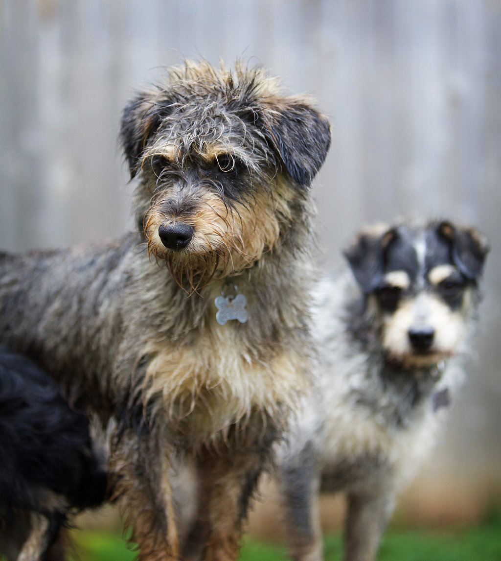 dogs-misc (5)